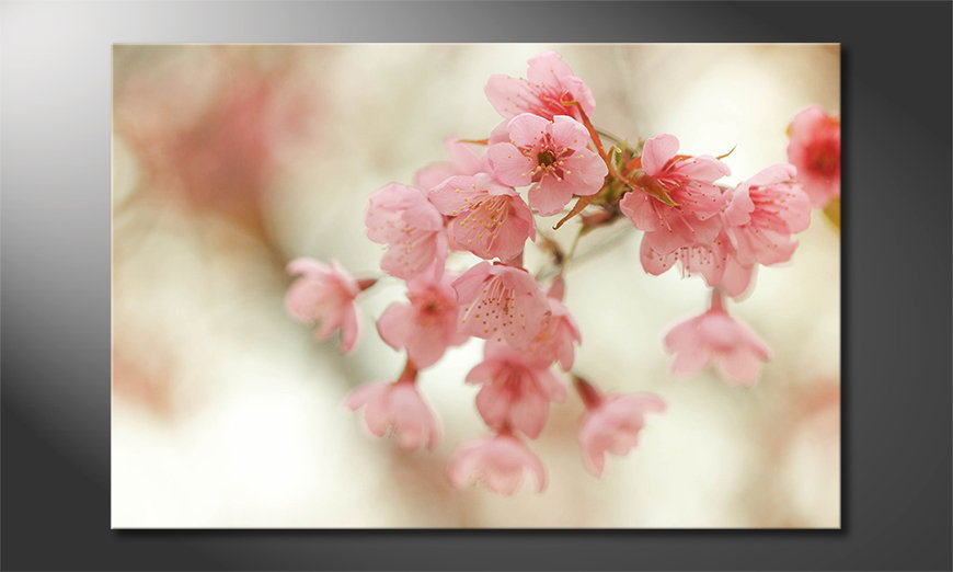 Fine-Art print Cherry Blossoms