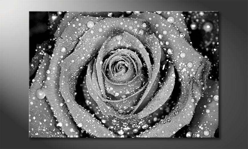 Fine-Art print Morning Rose
