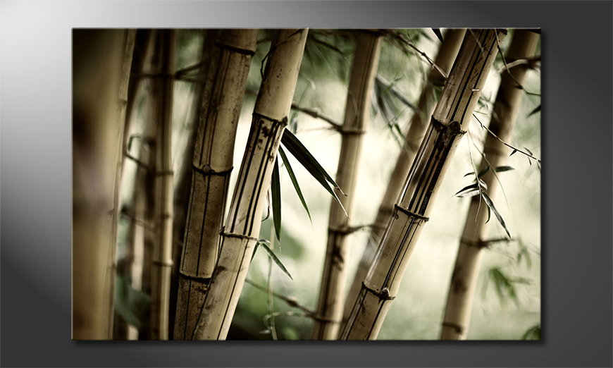 Het foto canvas Bamboo Forest