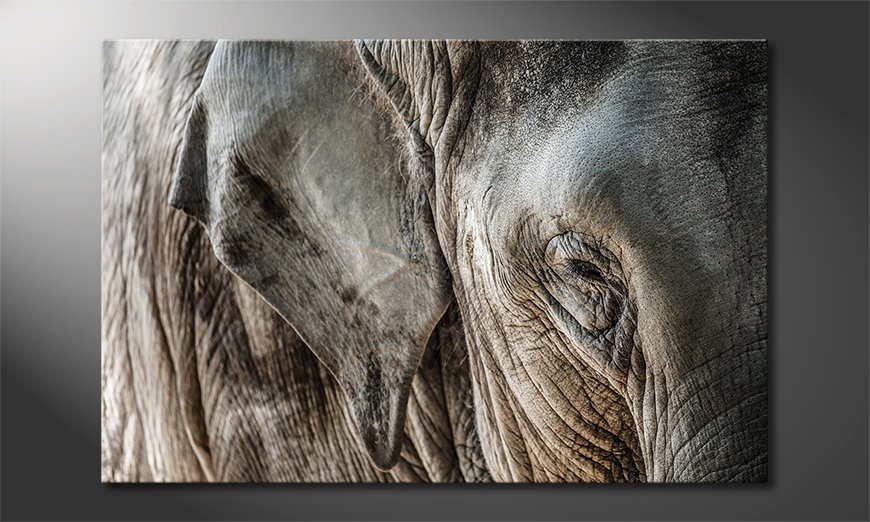 Het foto canvas Eye of Elephant