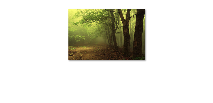 Het-foto-canvas-Green-Forest