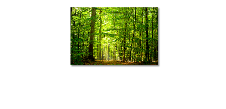 Het-foto-canvas-Into-the-Forest