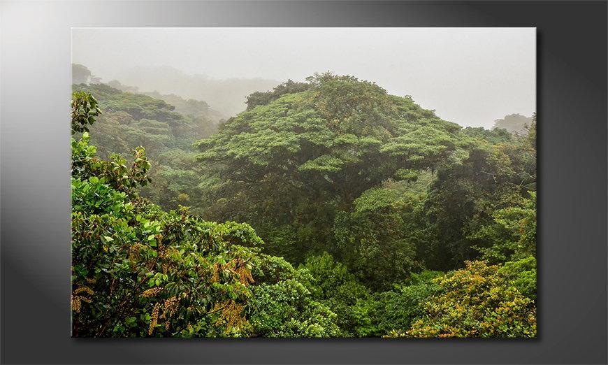 Het foto canvas Jungle
