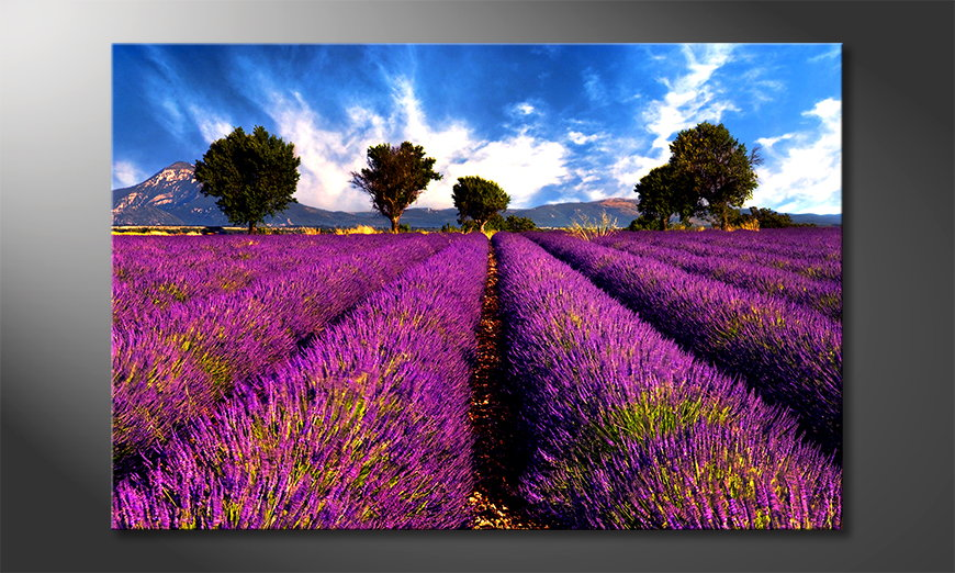 Het foto canvas Lavender