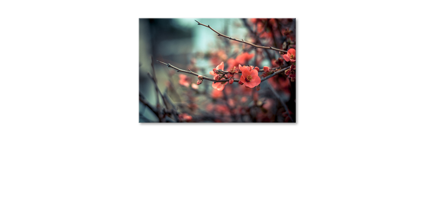 Modern-wandpaneel-Red-Blossoms