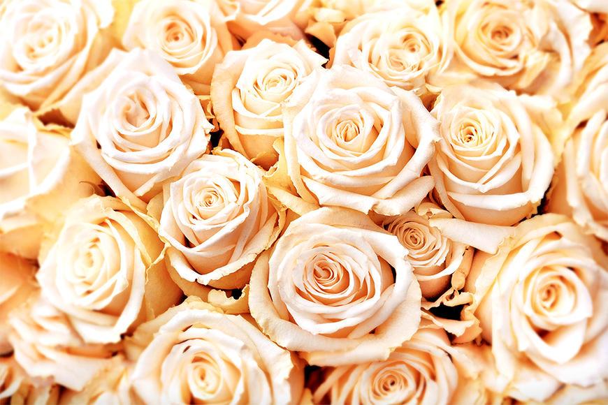 Vlies foto-behang Creamy Roses