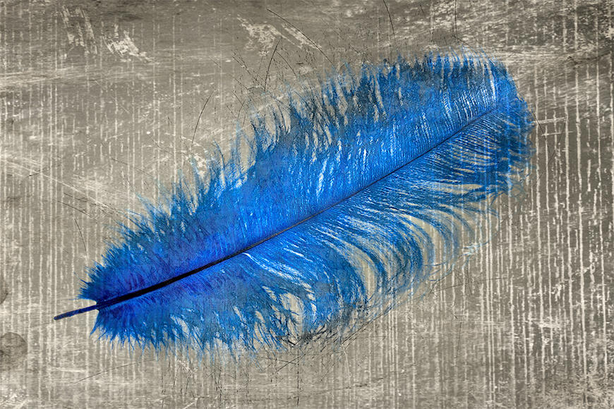 Vlies foto behang Feather In Blue