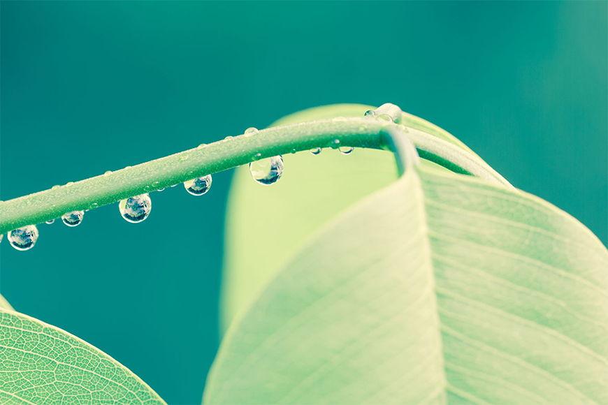 Vlies foto-behang Waterdruppels in 6 Größen