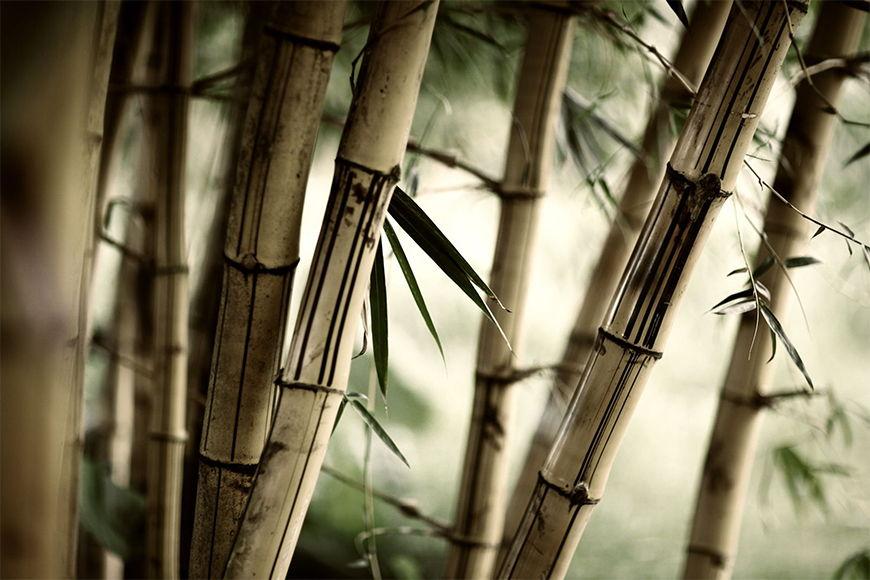Vlies fotobehang Bamboo vanaf 120x80cm