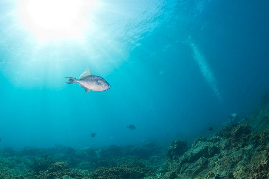 Vlies fotobehang Onderwater vanaf 120x80cm