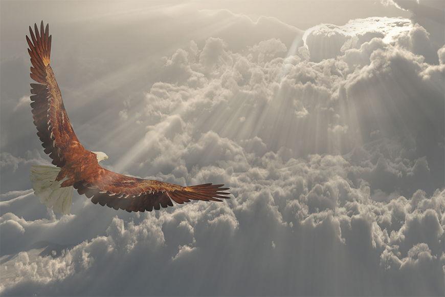 Vlies fotobehang Vliegende Adelaar vanaf 120x80cm